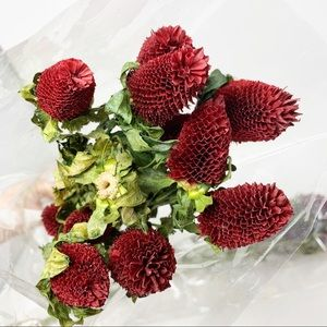 Anthropologie dried red burgundy flowers 2 bunches